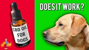 Essential cbd extract for pets - en pharmacie -  où acheter - site du fabricant - prix?  - sur Amazon