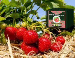 home-berry-box-mode-demploi-composition-achat-pas-cher